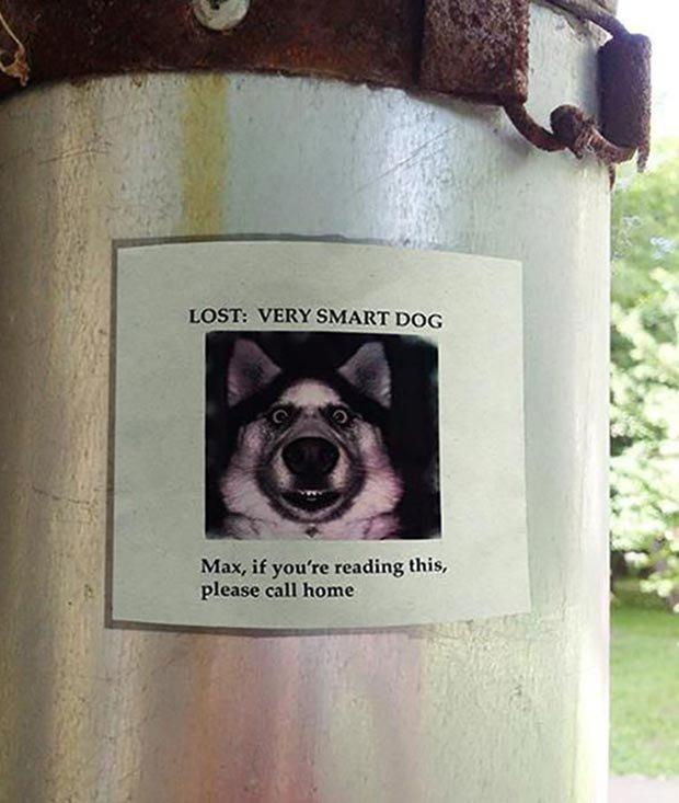 funny-signs-lost-dog-smart.jpg.7b5c828eb113334f86e5ea8d2ecdb4a7.jpg