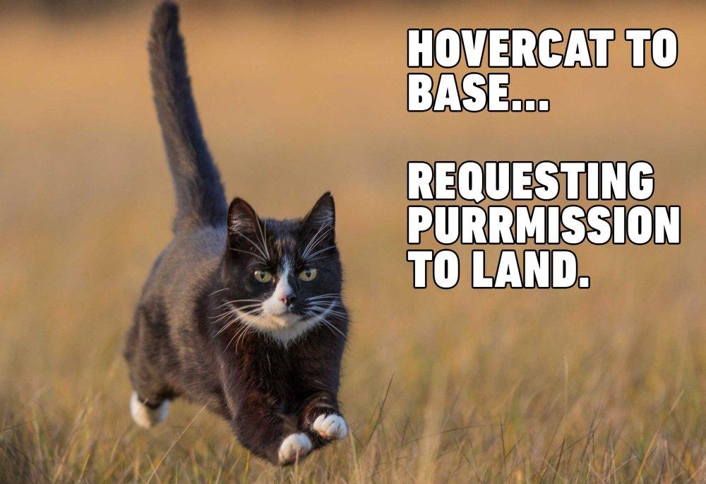 lede-cat-memes.jpg