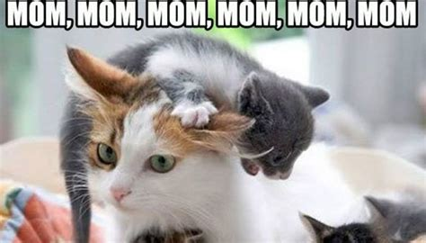 mommommomcat.jpg
