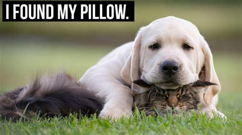 mypillowdog.jpg