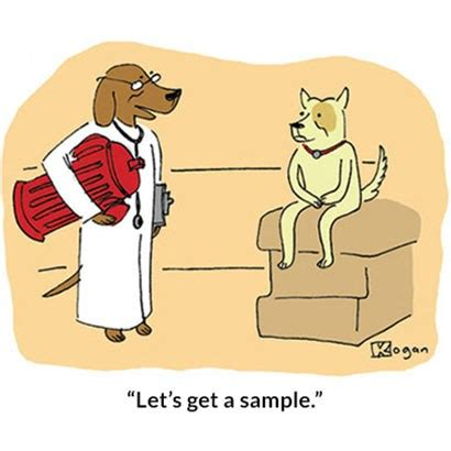 sampledogdoc.jpg