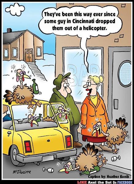 turkeys can fly.jpg
