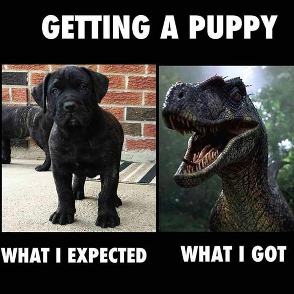 getting puppy.jpg