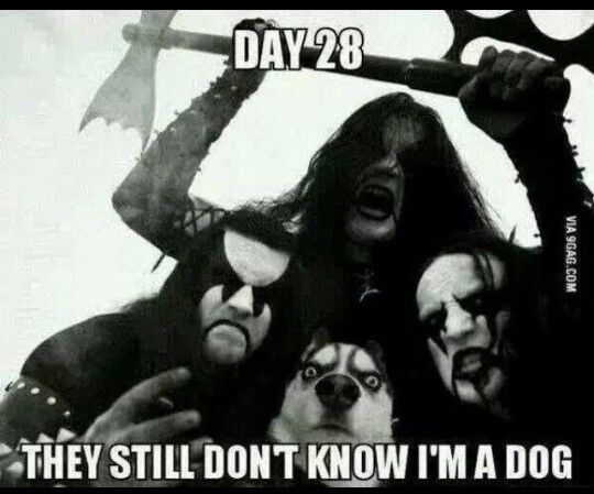that i'm a dog.jpg