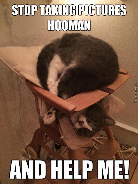 AAA scandiwegian-cats-be-crazy_o_4510891.jpg