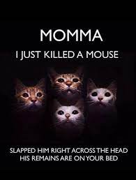 Momma I just killed a mouse.jpg