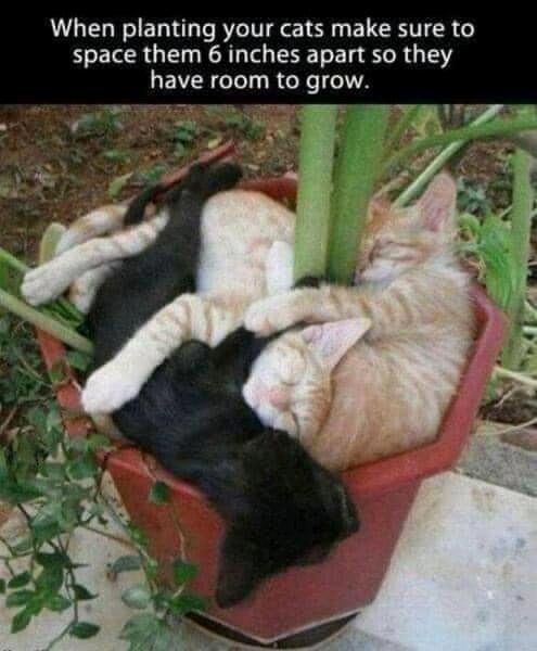 planting cats.jpg