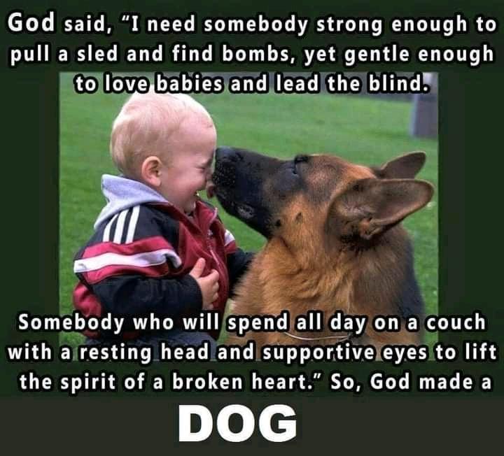 loving dog.jpg