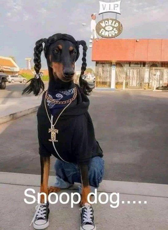 snoop dog.jpg