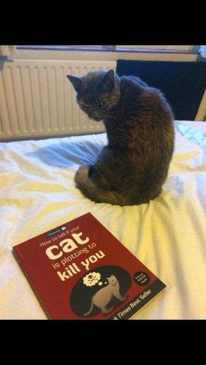 killer cat.jpg