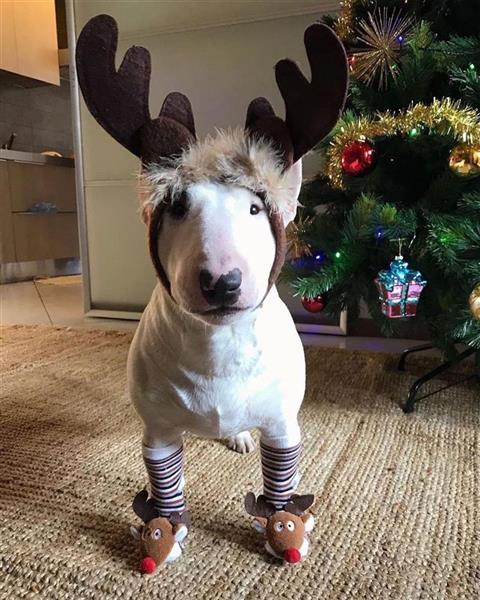 deer dog.jpg