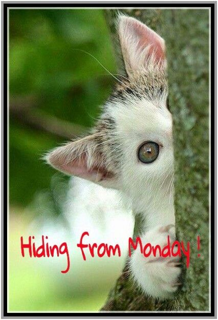 Hiding From Mondaay 944e510fe.jpg