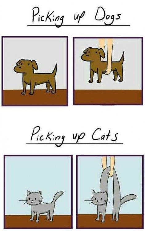 pick up cat.jpg