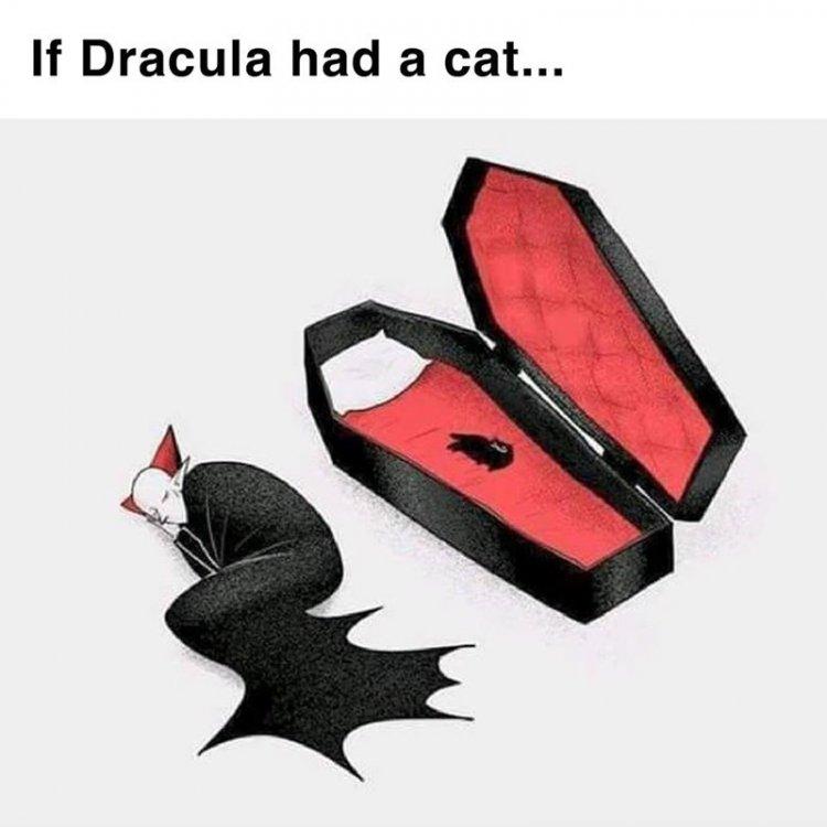 draculas cat.jpg
