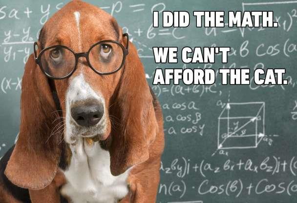 afford the cat.jpg
