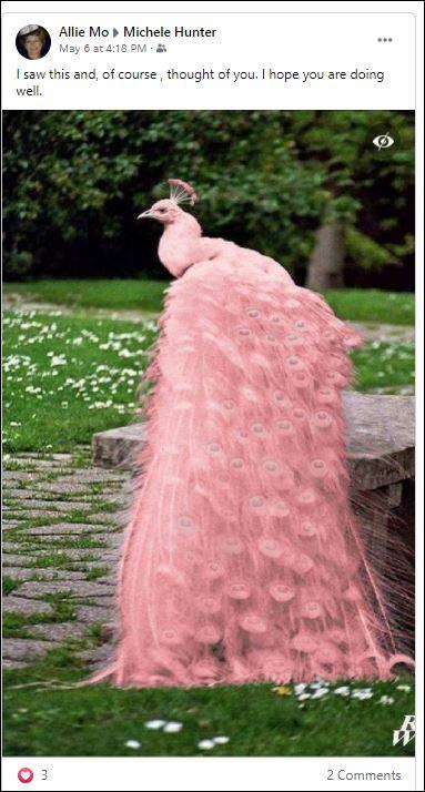 Pink Peacock.JPG