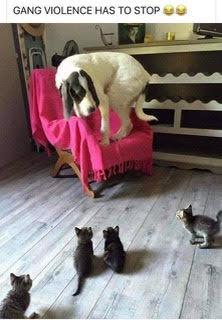 Cats cornered dog.jpg