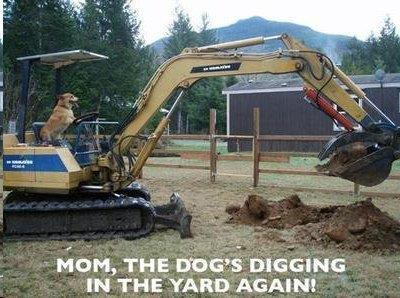 dog digging.jpg