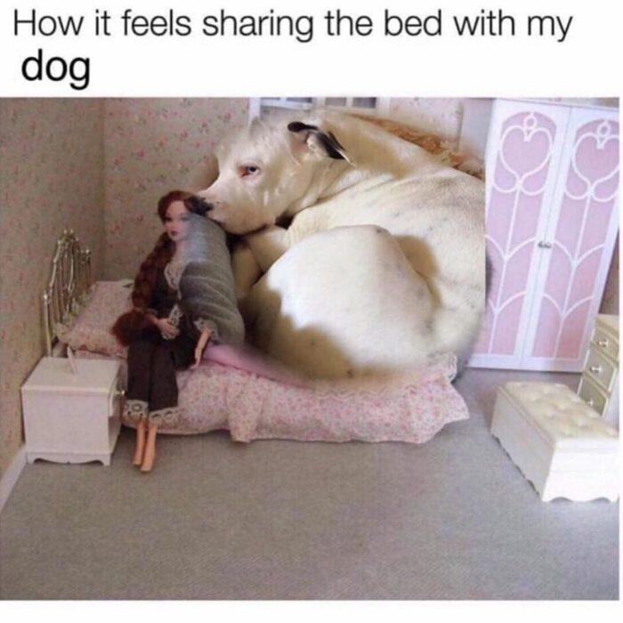 Dog-meme-16-e1585339421649.jpg