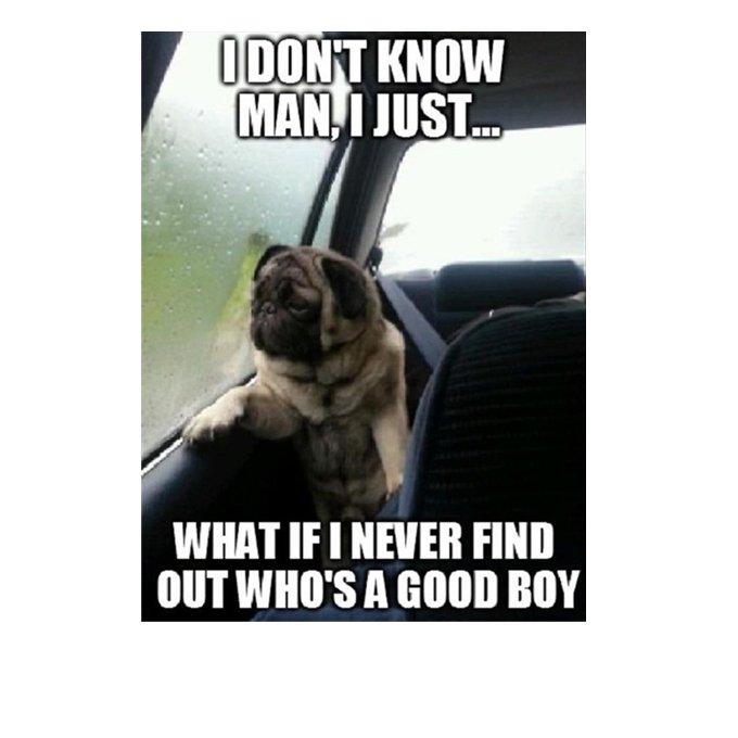 cute-funny-dog-meme-30.jpg