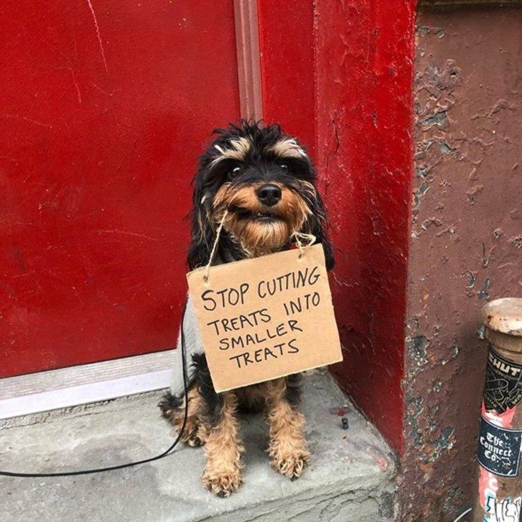 dog-with-sign-instagram.jpg