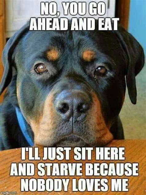 dogfoodguilt.jpg