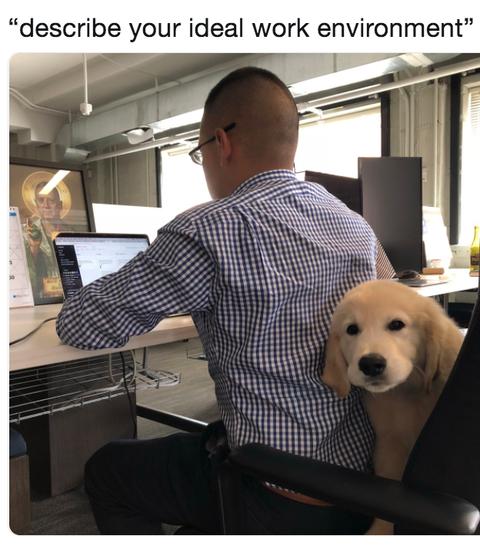 dream-job-dog-meme-1546549215.png