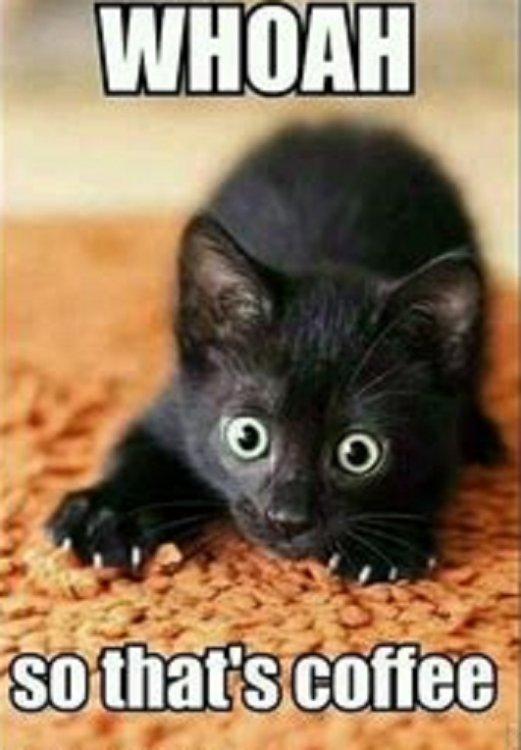 kittycoffee.jpg