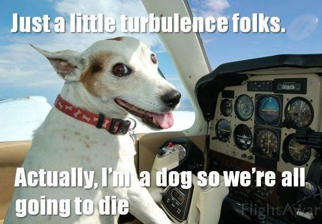 plane-dog-meme-1.jpg