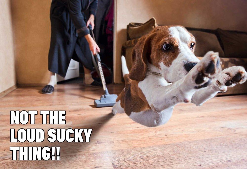 07-Hilarious-Dog-Memes.jpg