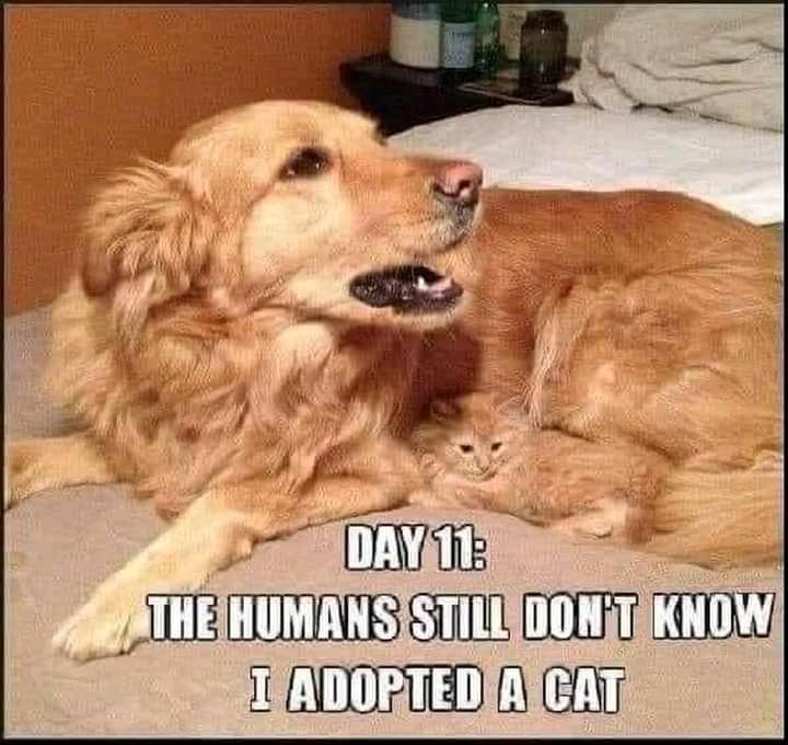 dog loves cat.jpg