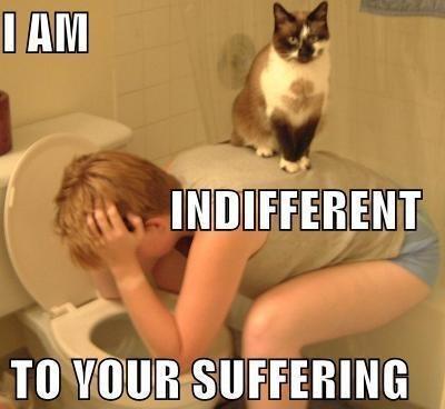 cat barf.jpg