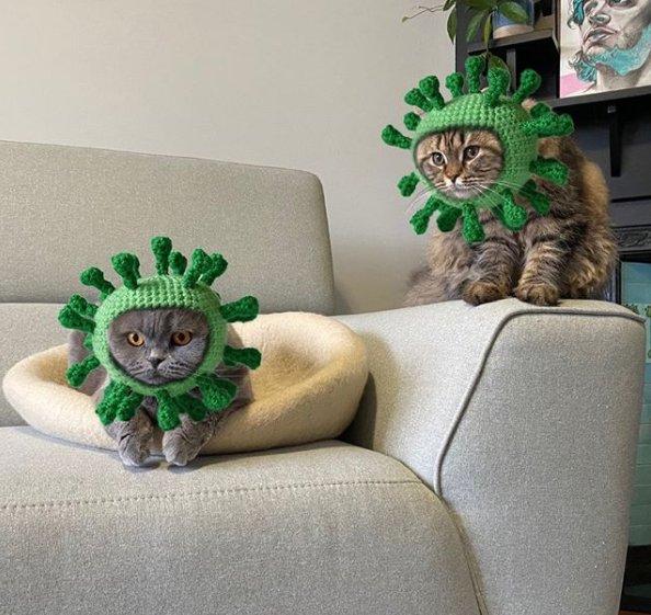Covid Cats _220311.jpg