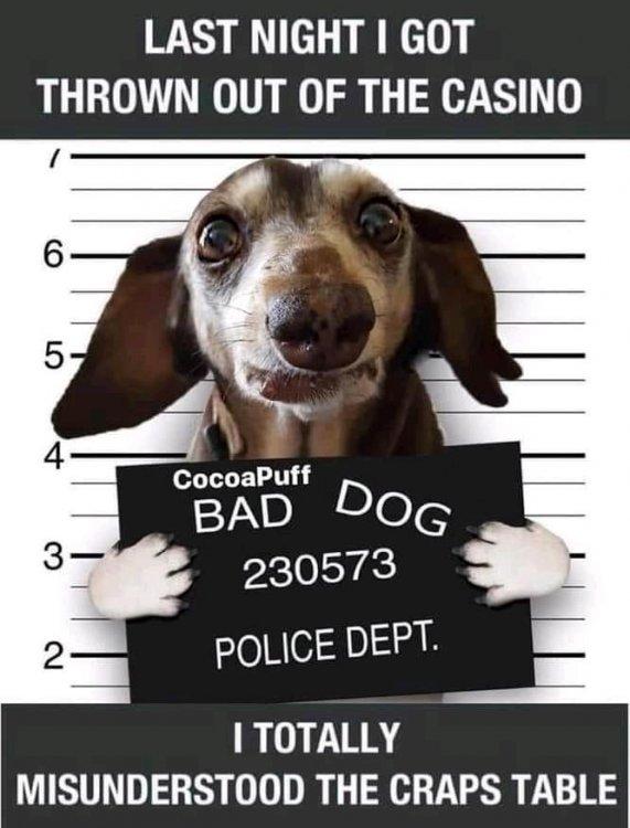 bad dog 1.jpg