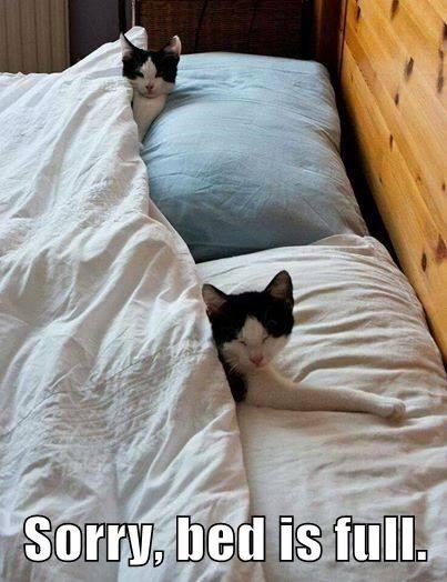 Cat Bed is full.jpg