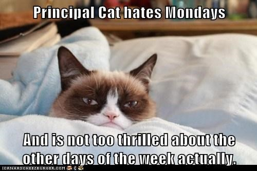 Hate Mondays not so much rest of week-about-the-other-days-of-the-week-actually.jpg