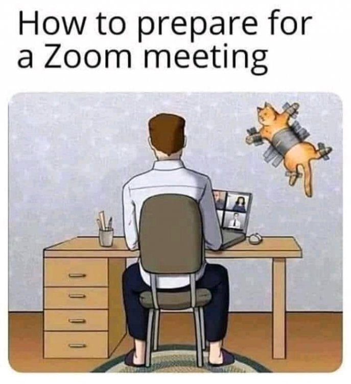 zoom cat.jpg