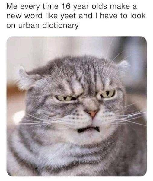 mad cat 1.jpg
