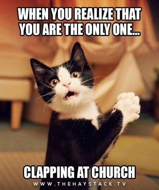 clapping cat.jpg
