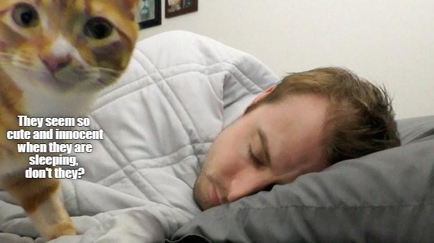 best-let-him-sleep.jpg