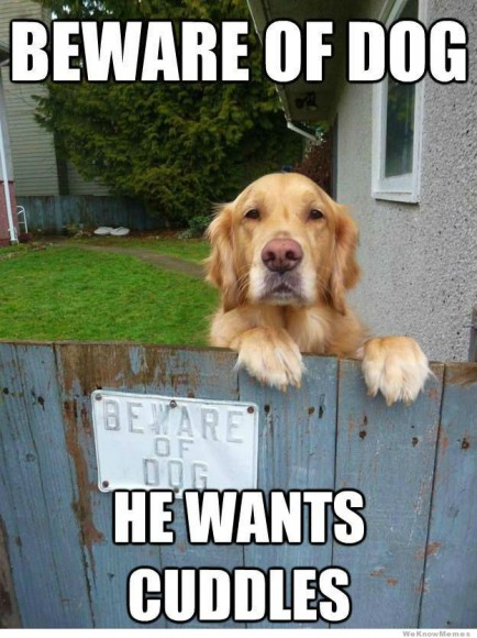beware-of-dog-meme.jpg