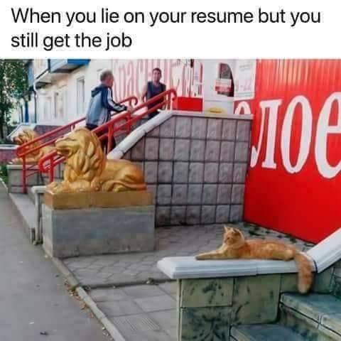 catliesjob.jpg