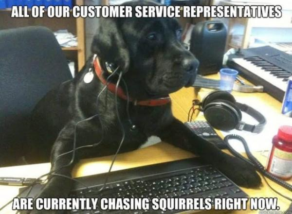 chasingsquirrels.jpg
