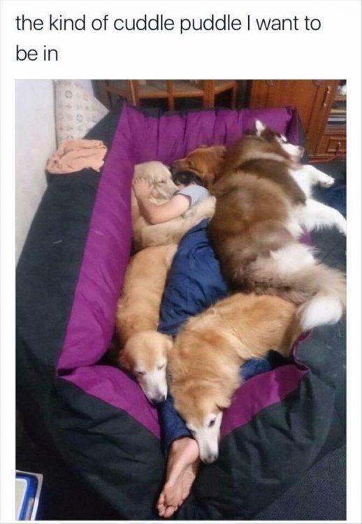 funny-animals-13-5.jpg