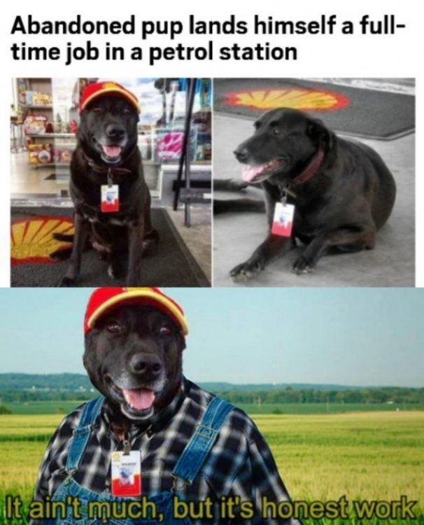 funny-meme-about-dog-with-human-job-its-not-much-but-its-honest-work.jpg