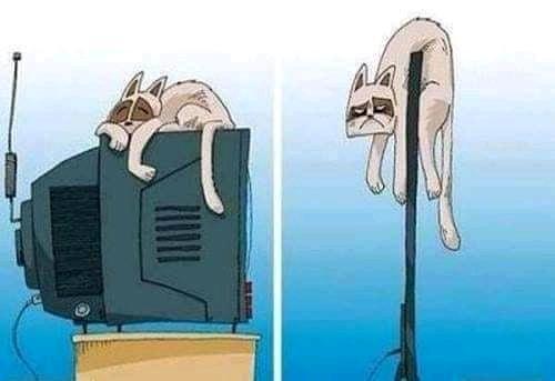 poor kitty.jpg