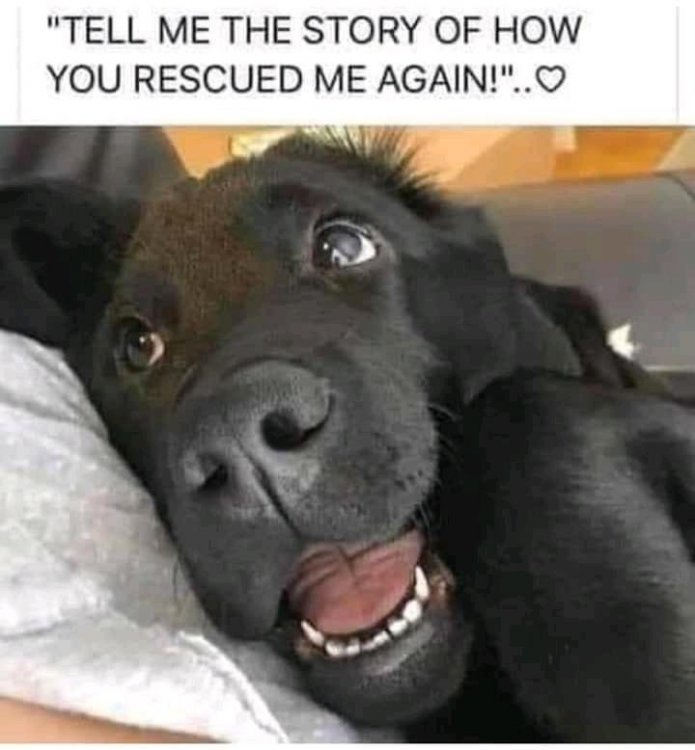 rescue dog.jpg