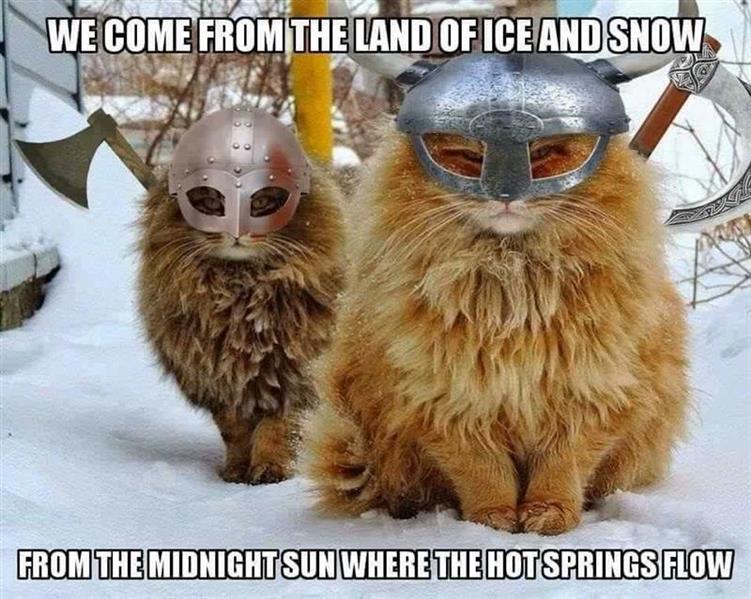 viking cats.jpg