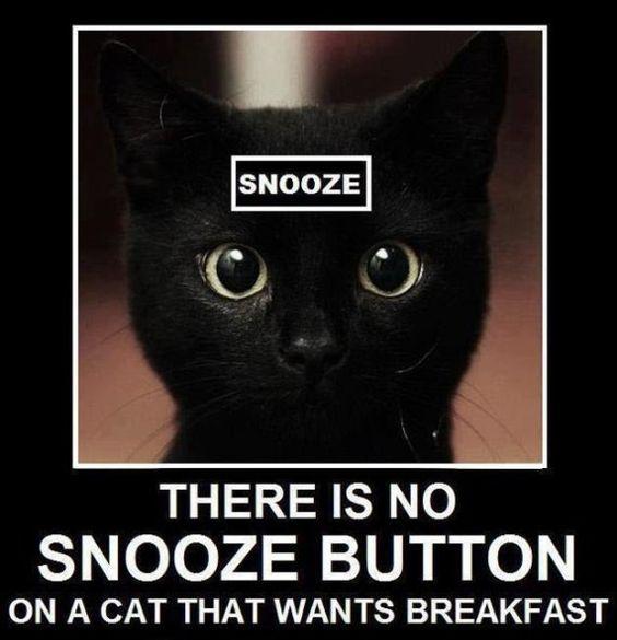 Cat No Snooze button.jpg