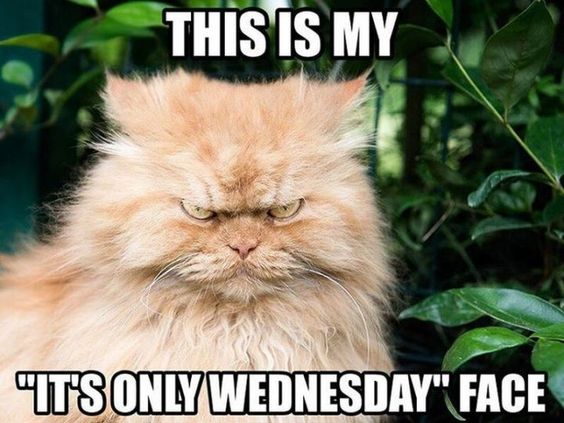 AAA Its Only Wednesday Facecefc68365db56a26ec7a0cdc489983d2.jpg